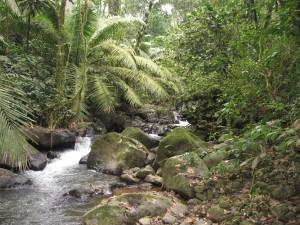 Panama Stream3